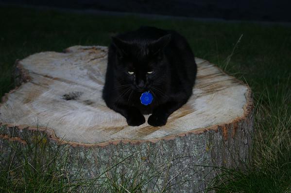 Madeline's Cat