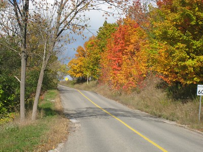 Colourful leaves along the road