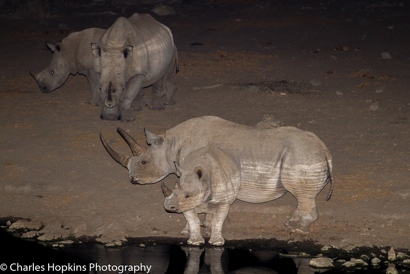 White Rhinoceros , and Black Rhinoceros