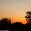 Madikwe landscape sunset