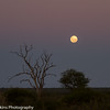 Madikwe landscape moon rise