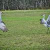 D85_2526_Birds_30Nov18_Lu