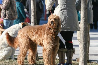 Saturday Dog Jog