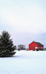 Carol Piper - Winter