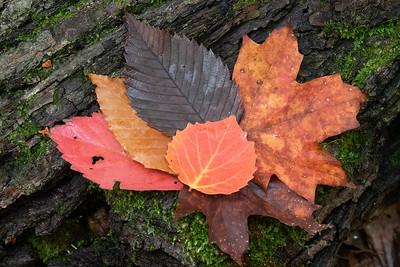 Autumn Gabriella
