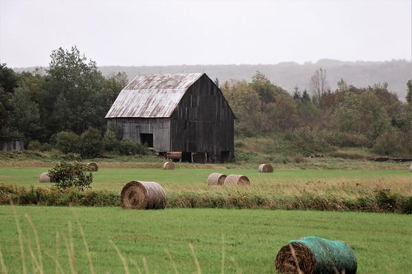 Carol Piper Rural