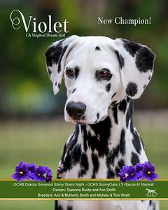 Violet new champion