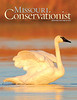 My first Missouri Conservationist cover:  A trumpeter swan takes a rinse at Riverlands Migratory Bird Sanctuary, West Alton, Missouri (Courtesy of the Missouri Department of Conservation)