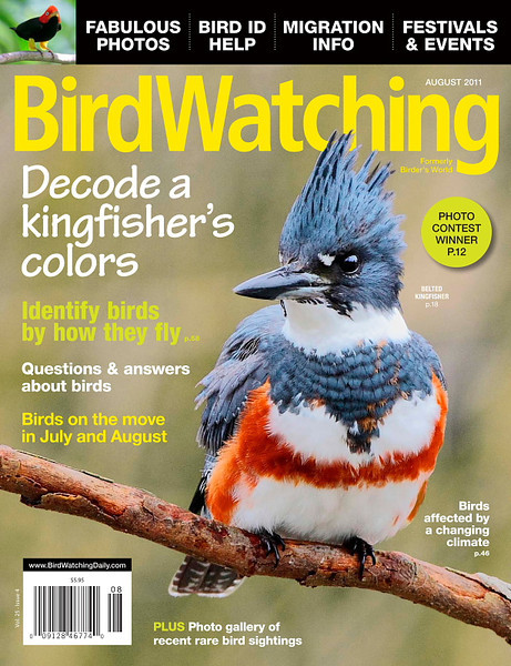 A belted kingfisher - my first National Cover.