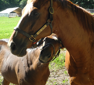 Horses - JULY