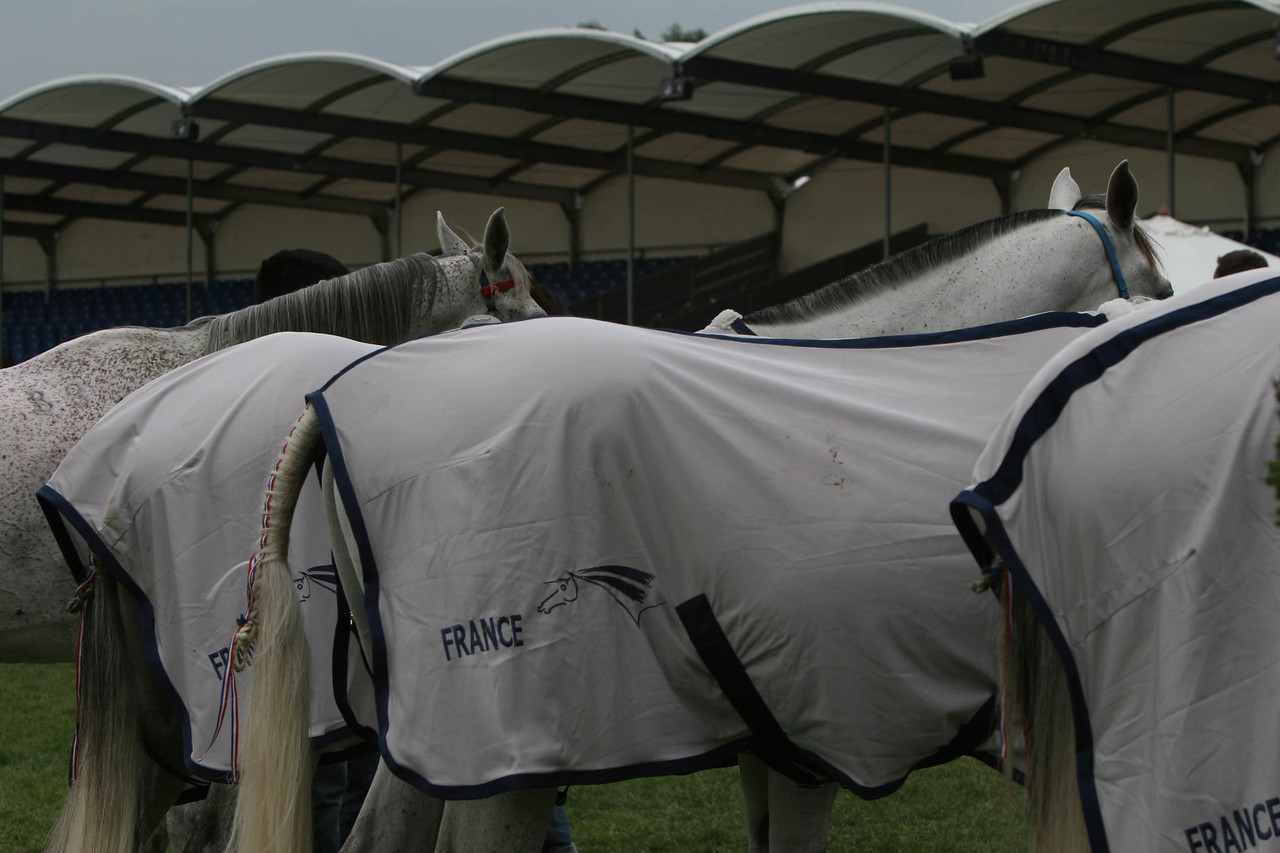 #16- French team horses