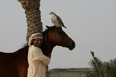 Ali Al Ameri