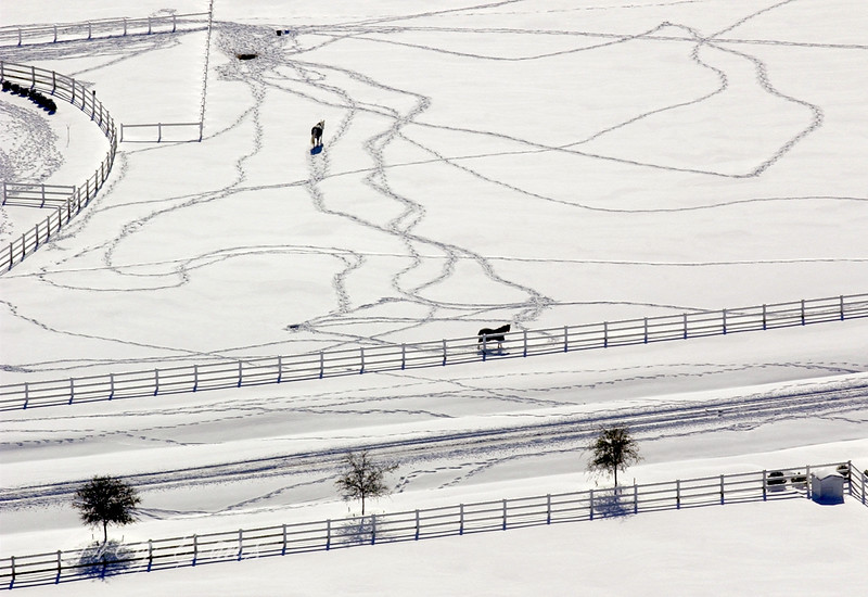 Aerial photo of horses in a field in North Carolina after a snow storm.