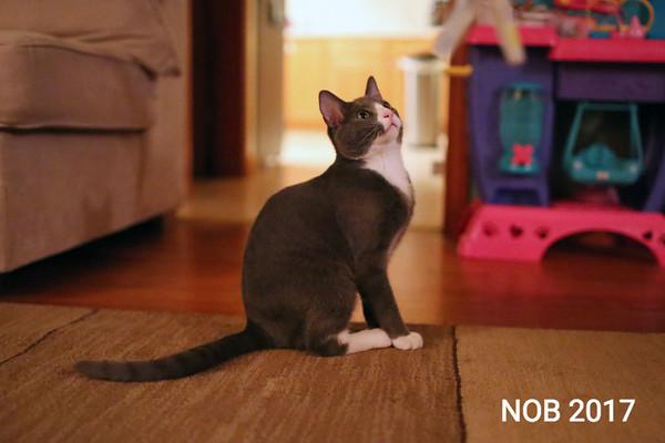 170309_sn_hgr_cats_006.JPG Friends of Beverly Animals