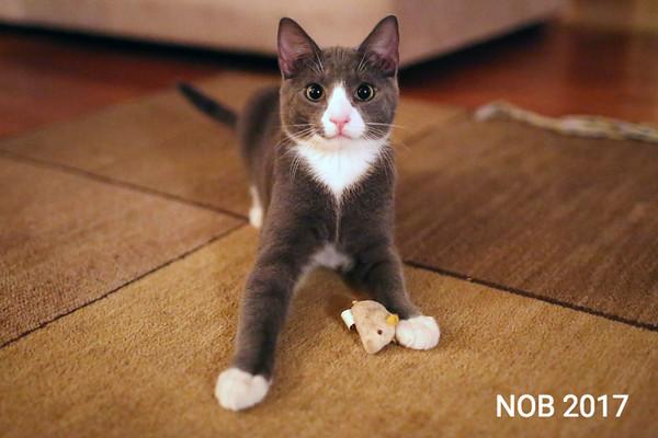 170309_sn_hgr_cats_005.JPG Friends of Beverly Animals
