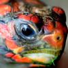 JIM VAIKNORAS/Staff photo  Cherry head tortoise at the Rainforest Reptile Shows