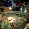 JIM VAIKNORAS/Staff photo Joaney M. Gallagher of Rainforest Reptile Shows feed tortoises