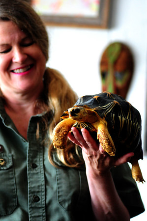 """JIM VAIKNORAS/Staff photoJoaney M. Gallagher with  """"Styx"""" the radiated tortoise from Madagascar"""