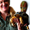 "JIM VAIKNORAS/Staff photoJoaney M. Gallagher with  ""Styx"" the radiated tortoise from Madagascar"
