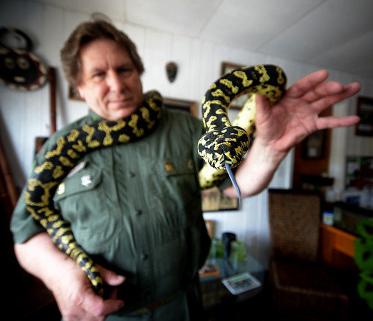 JIM VAIKNORAS/Staff photo Michael K. Ralbovsky of Rainforest Reptile Shows with a Jungle Carpet Python.