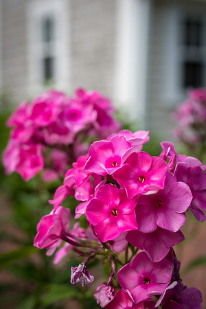 Pink phlox is among the many flowers found in the perennial gardens on the property.