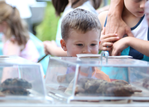 DAVID LE/Staff photo. Three-year-old Spencer McLlarky, of Danvers, eagerly awaits his cookie at the Danvers Farmers Market on Wednesday. 6/15/16.