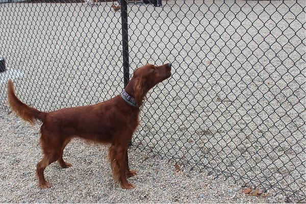 The Danvers Dog Park<br />  9/20/16
