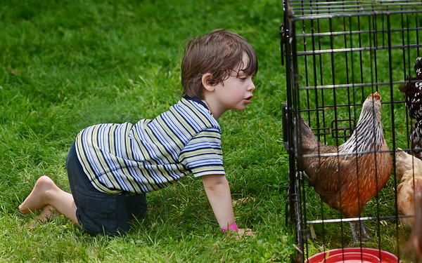 Three-year-old Wes Maylor of Danvers looks at some chickens on display Saturday during Endicott Park Day in Danvers. Part of the Danvers Family Festival, the event included activities for all ages, including a doll carriage parade, bicycle parade, rides, and musical performances. (Photo by Mike Springer)