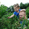 TIM JEAN/Staff photo<br /> XXXX picking blueberries in the fields at Sunnycrest Farm in Londonderry. 7/8/16