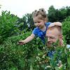 TIM JEAN/Staff photo<br /> XXXX picking blueberries in the fields at Sunnycrest Farm in Londonderry. 7/8/16
