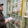 Rick Esser checks his inventory of mushrooms growing out of blocks of substrate at EJ Mushrooms in rural Madison Lake. Esser grows a variety of mushrooms that he harvests and sells to local businesses.