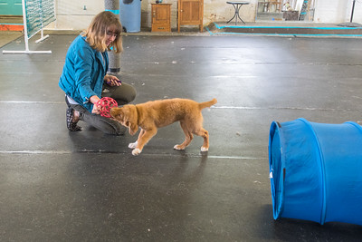 Alex Oldenburg tries to pull a toy out of Windigo's mouth while she trained the puppy at Messy Dog in Mankato. Oldenburg said dog training is not a licensed profession, but she gained experience in dog training during 4H. Photo by Jackson Forderer