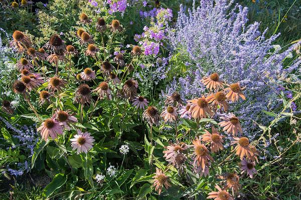 What may seem like ordinary flowers in Megan Schnitker's garden are used in her various products. Schnitker, who is Lakota, uses various plants to make her products, from soaps and shampoo to sunscreen and medicinal teas.