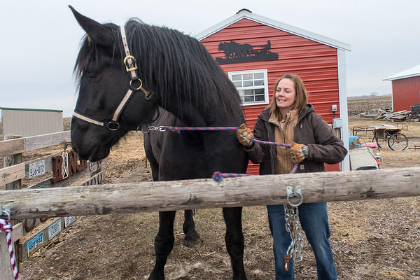 Shirlene Hvinden tries to lead a draft horse away from its stable at her farm in rural New Ulm. Photo by Jackson Forderer