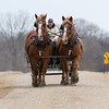 Jason Benson leads a team of draft horses down a gravel road in rural New Ulm. Photo by Jackson Forderer