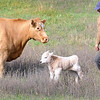 Pat Christman <br /> 2-day old calf.