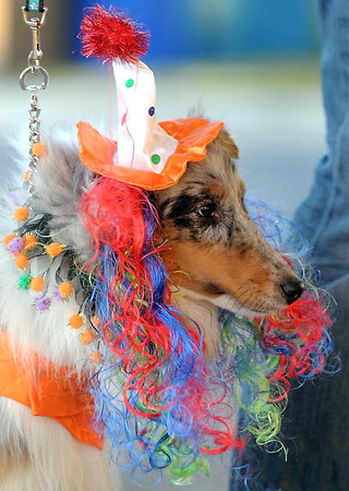 Terri Hoppe's dotg Kaija is ready to do some trick or treating during the Pet Expo Halloween Party Friday at The Paw in Mankato.