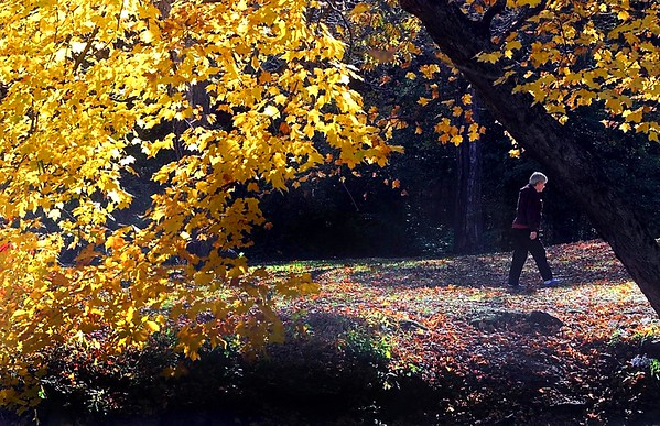 A woman takes a walk among sun-dappled leaves in Minneopa State Park. Photo by Pat Christman