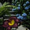 Marblehead:<br /> Pat Ayer's backyard garden.<br /> Photo by Ken Yuszkus/Salem News, Tuesday, July 12, 2011.