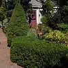 Marblehead:<br /> Front garden pathway going from backyard to garage: Boxwood hedge, varigated weigeria, wine and roses weigeria, Alberta spruce, spruce tree varieties (framing garage door) in Karin McCarthy's garden at 15 Cloutmans Lane. <br /> Photo by Ken Yuszkus/Salem News, Tuesday, September 13, 2011.