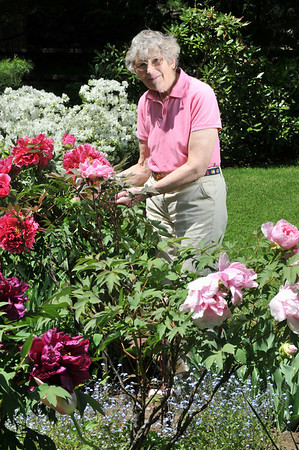 Marblehead: Barbara Dow's spring garden is in full bloom.  photo by Mark Teiwes / Salem News