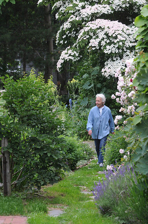 Marblehead:<br /> Bette Hunt walks Hollyhook Lane. Bette Hunt checks out right of ways in Marblehead.<br /> Photo by Ken Yuszkus/Salem News, Thursday, June 17, 2010.