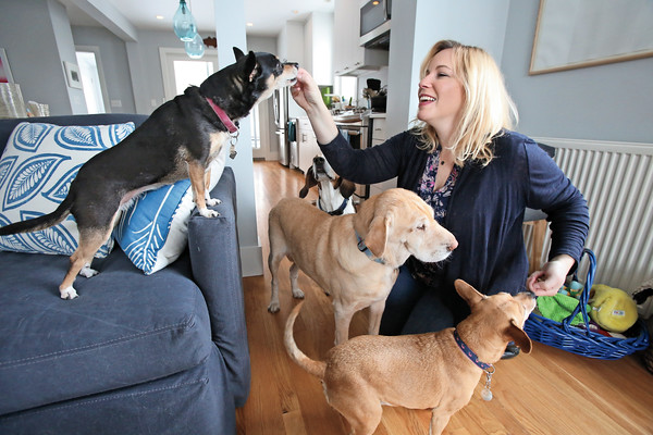 KEN YUSZKUS/Staff photo.    Liz Weinstein with her four dogs Bertie,Tippi, Zelda and Marley. She is feeding them treats.      2/11/16
