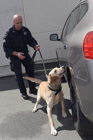 190424_mid_tje_sheriff_dogs_10.jpg