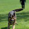 190424_mid_tje_sheriff_dogs_14.jpg