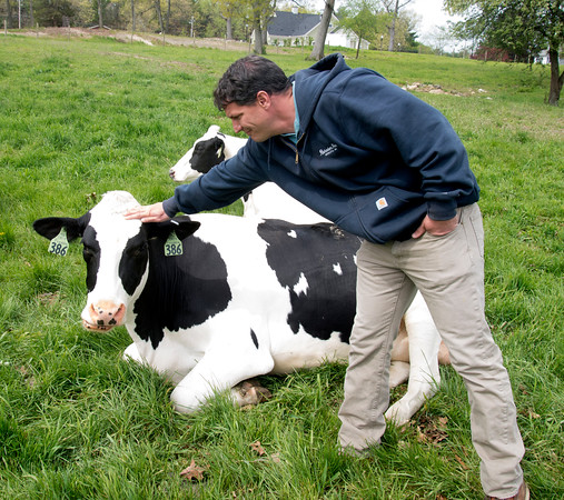 JIM VAIKNORAS/Staff photo  Richardson's manager Ned Bolth checks on the cows at the Middleton farm.