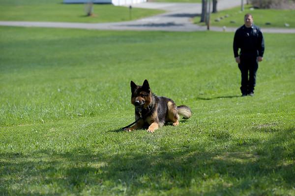 190424_mid_tje_sheriff_dogs_15.jpg