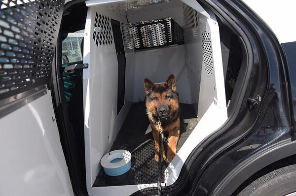 190424_mid_tje_sheriff_dogs_03.jpg