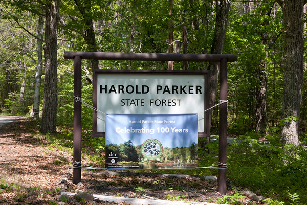 AMY SWEENEY/Staff photo. <br /> Harold Parker State Forest, which lies in Andover, North Andover, North Reading and Middleton, comprises just over 3,000 acres of Central Hardwood-Hemlock-White Pine type of forest.<br /> May 25, 2016