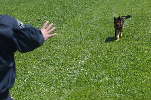 190424_mid_tje_sheriff_dogs_13.jpg